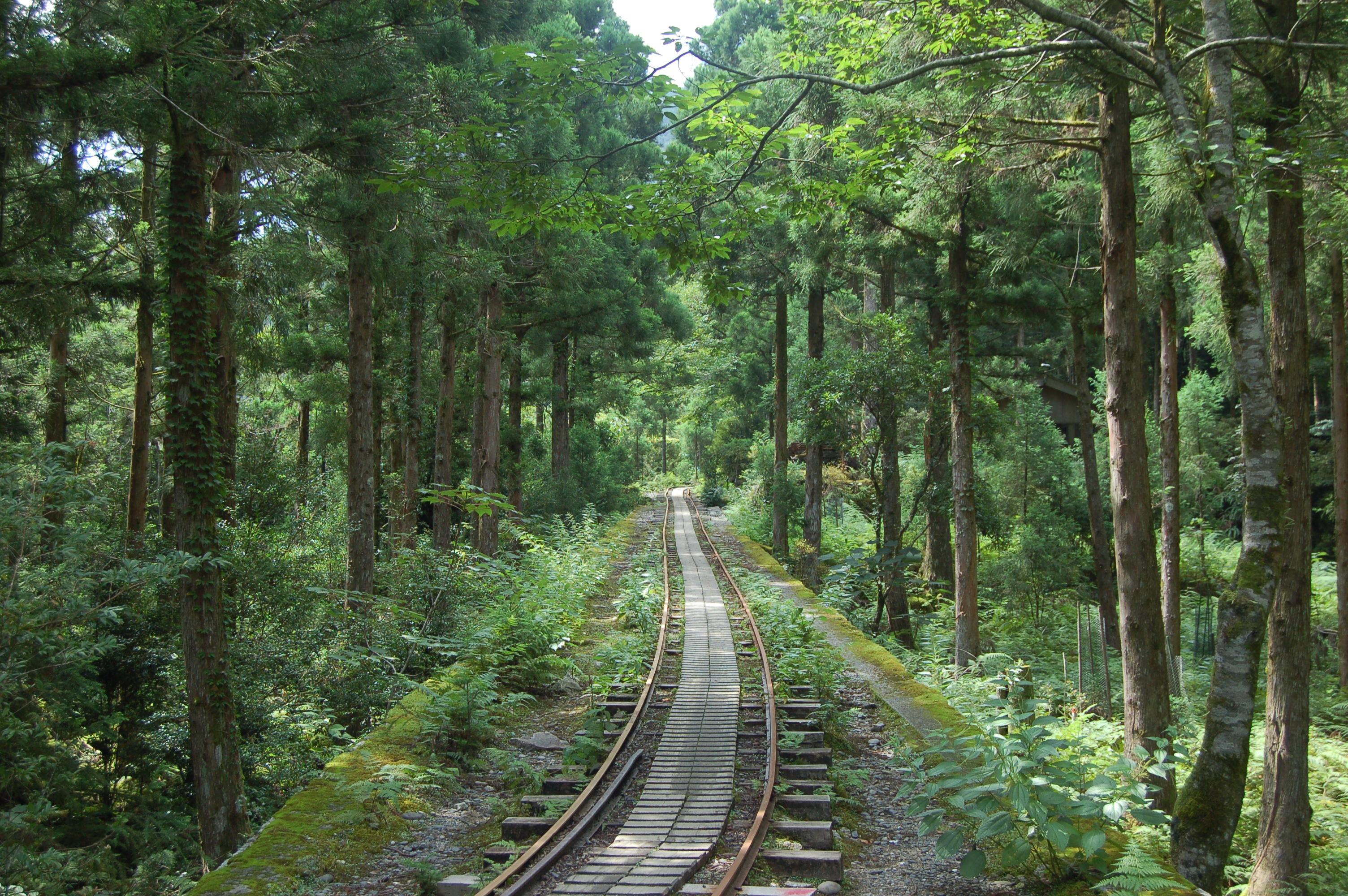 09 yakushima