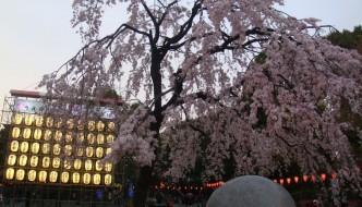 花見Hanami y 桜 Sakura (Flores de Cerezo)