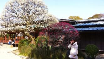 IBARAKI y el parque Kairakuen 偕楽園