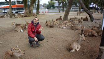 Nara, Todaiji y ¡los ciervos asesinos!