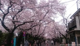 Las 15 mejores fotos de Sakuras 2016 (+ mi 32 cumpleaños)