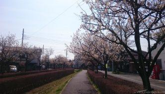 ¡LLEGA LA PRIMAVERA A JAPÓN y a mi jardín!
